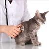 Ветеринарные клиники в Дедовичах